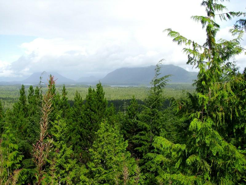 Treetop View Over Rainforests on West Coast at Radar Hill