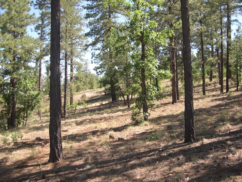 flagstaff, flagstaff az, flagstaff ranch golf club, gated community, exclusive location, heavily treed, high pines, build custom home