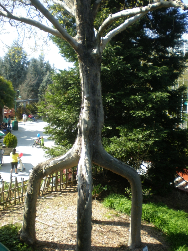 Gilroy ca gilroy gardens light show for Gilroy garden trees