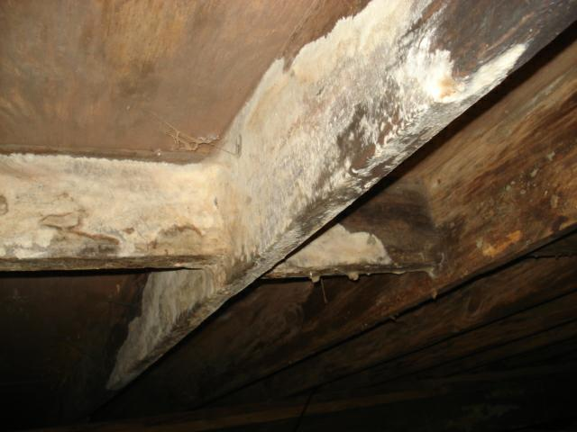kentucky home inspector mold joists crawl space
