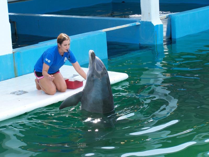 Clearwater Marine Science Aquarium In Clearwater Florida