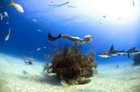 Salt life coral springs fl