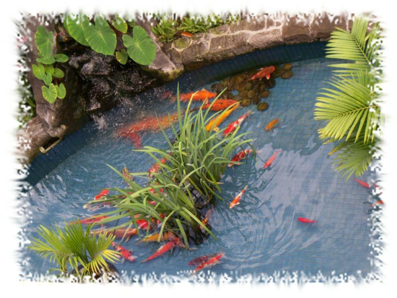 Honolulu shopping centers and the kakaako neighborhood plan for Runescape koi pool