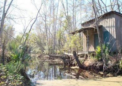 Swamp Property - Cheap!