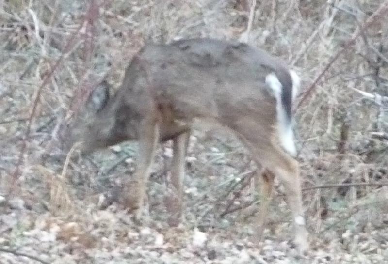 Deer HomeRome 410-530-2400