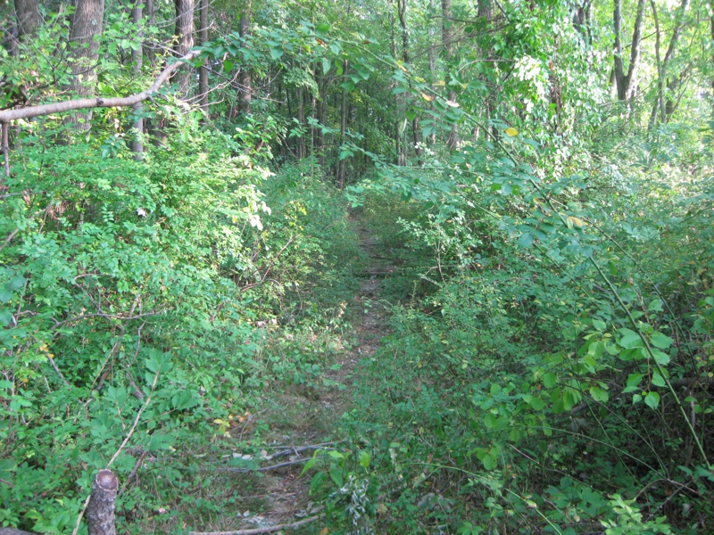 indian hill trail got smaller