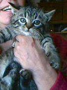 Kitty Moe
