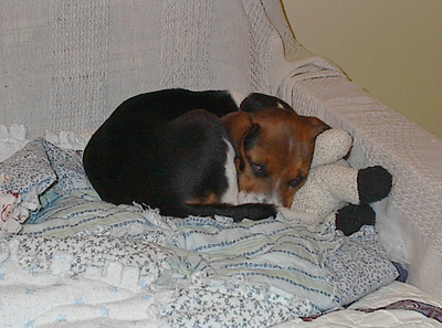 Puppy on Futon