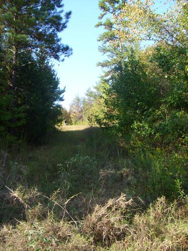 Land For Sale In Montgomery County Mississippi