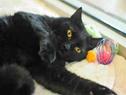 DFL kitty