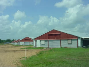 Poultry farm for sale in Amite County Mississippi