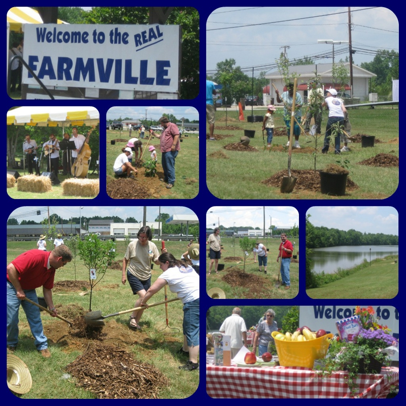 Planting of Farmville's VA Orchard