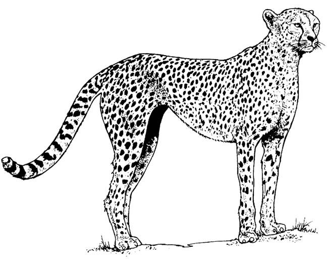 The Katy Texas Blog : Houston Safari Club is Holding its