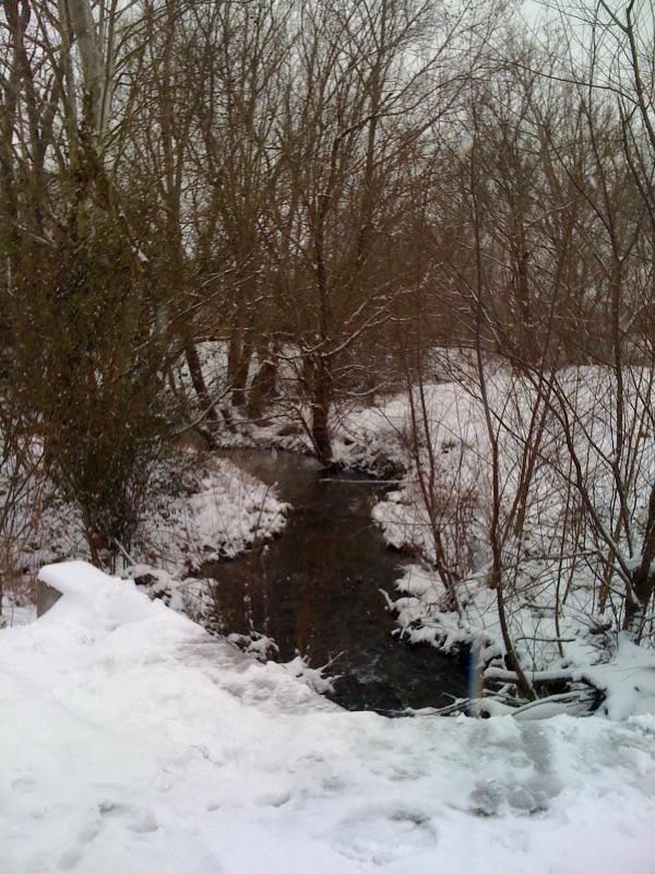 The Creek behind the Parks at Wyngate