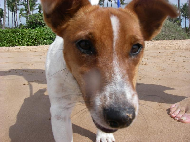 Kona at the beach in Wailea Maui HI