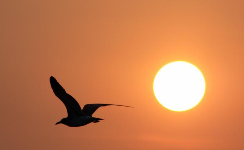 Sunrise Gull