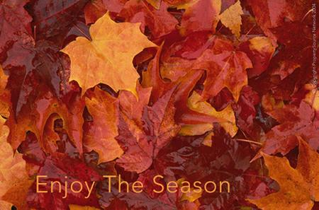Best Wishes for A Blessed Fall Season