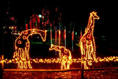 The Lights Before Christmas at Riverbanks Zoo in Columbia SC
