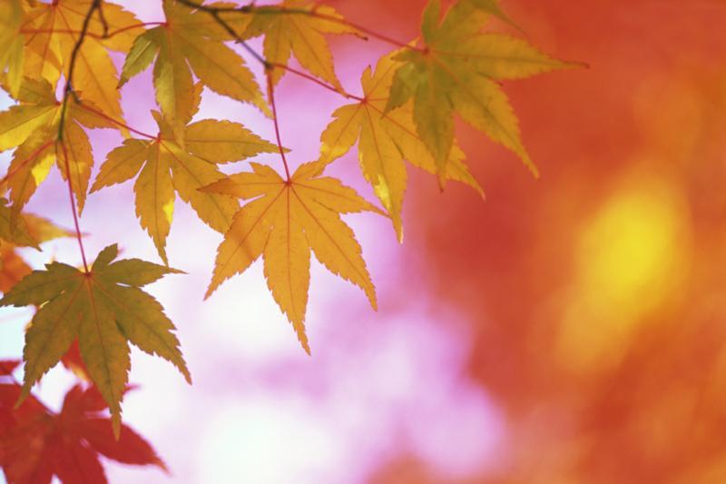 Как провести выходные (13-14 октября 2012г.)?