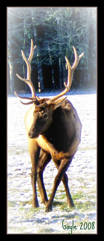 Elk Reserve Jewell Oregon by Gayle Rich-Boxman