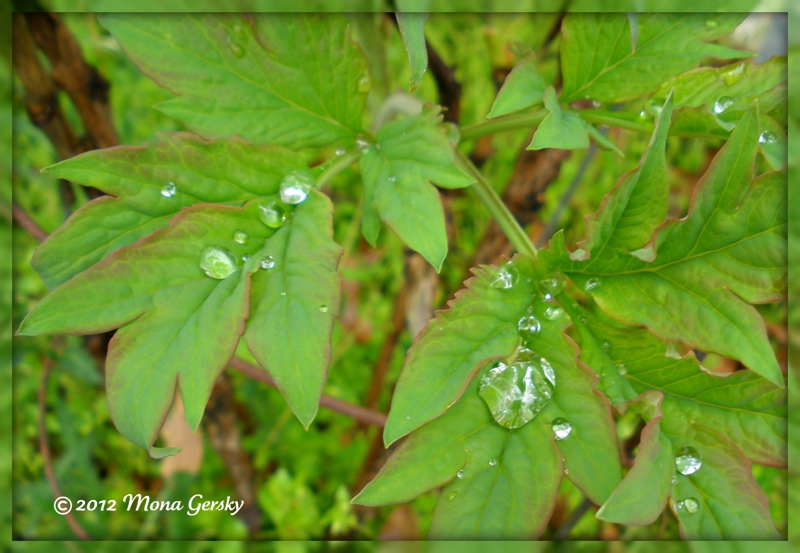 After the Rain in Dillsboro NC copyright 2012 Mona Gersky