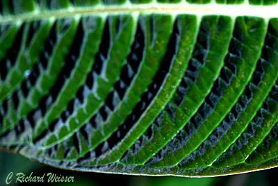 Green Leaf with interesting pattern