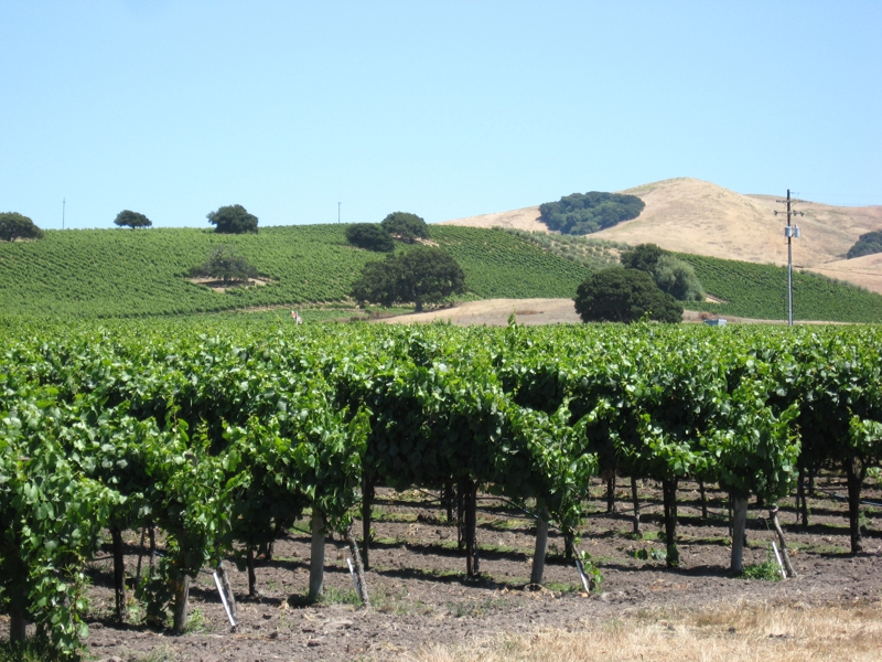 Napa Valley Agricultural Land and Vineyards For Sale