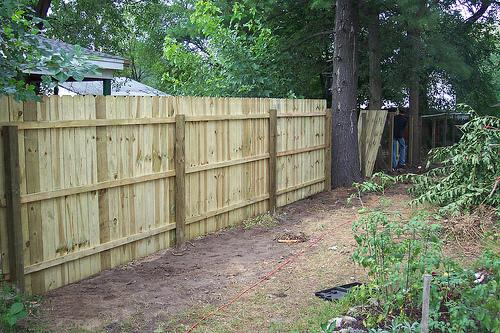 Natural screen or privacy fence for Natural privacy fence