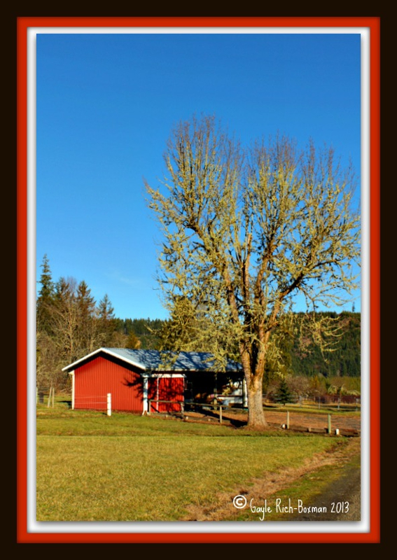 Pebble Cr barn and tree-Gayle Rich-Boxman 2013 All Rights Reserved