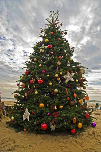 Christmas tree at Crystal Cove 2010