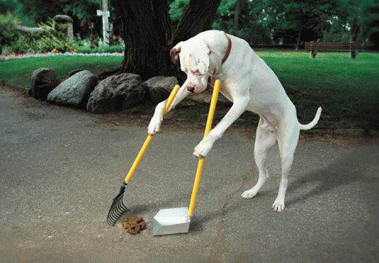 A dog standing and sweeping it's poop into a pan for disposal