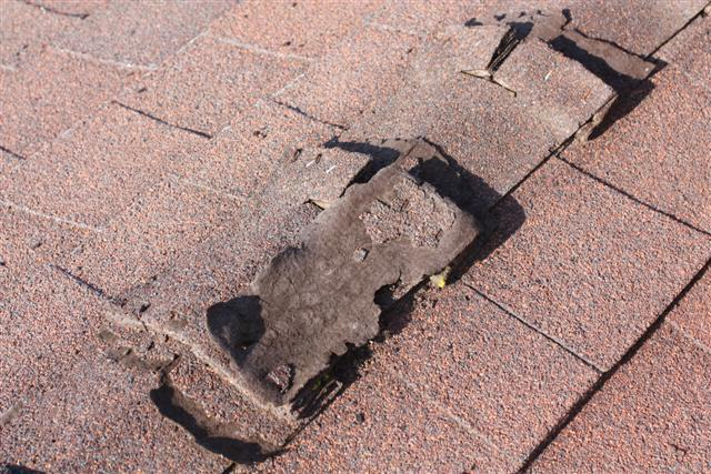 Damage to ridge row shingles by ravens