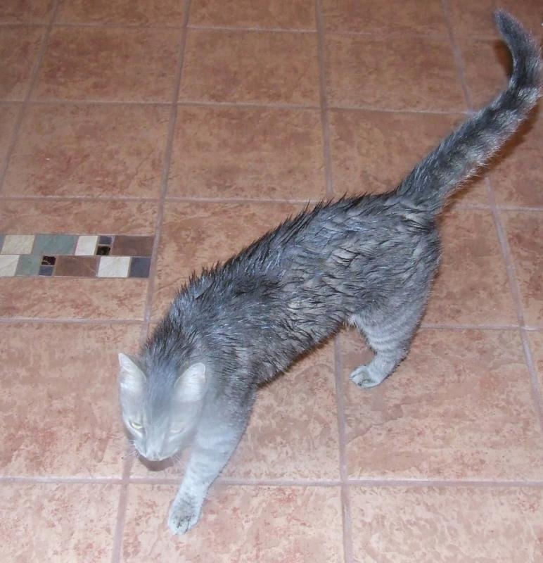 Deb's Cat...Desi Brooks. Wet, hungry and scared but SAFE