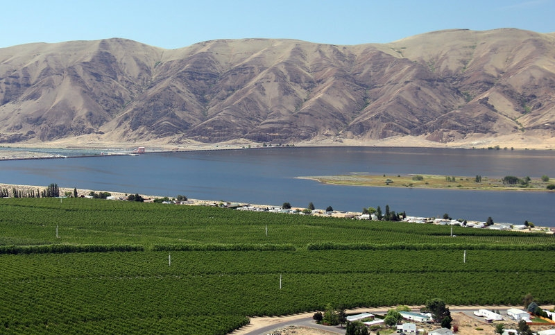 vineyard in Eastern Washington for sale