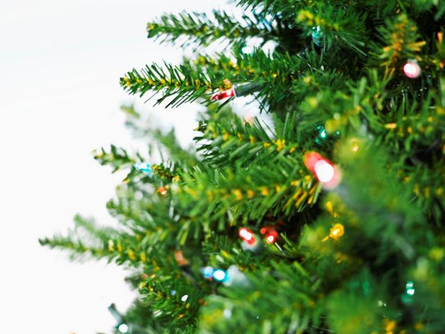 Where Do I Dispose Of My Christmas Tree In Canton Ma