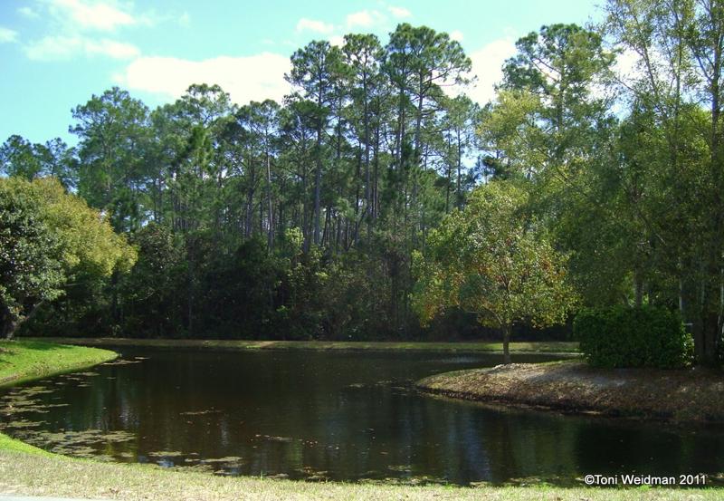 RoseRosewood at River Ridge- New Port Richey, FL