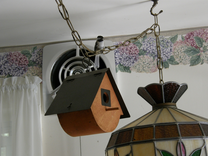 Chickadee on Tiffany Swag with Birdhouse