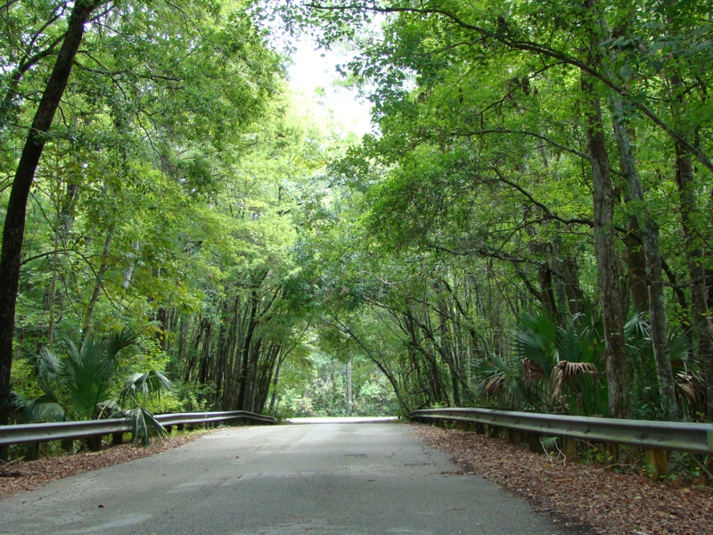 Off of Holly Point Rd in Orange Park Florida