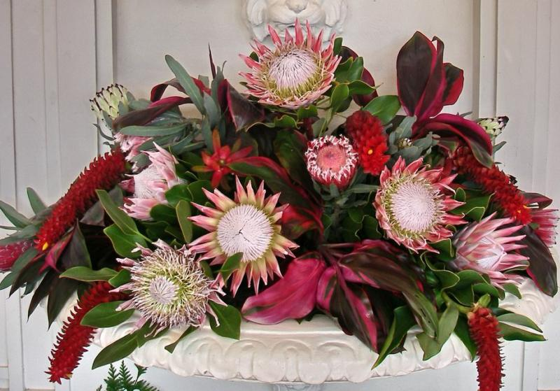 protea flower arrangement at Hui No'eau