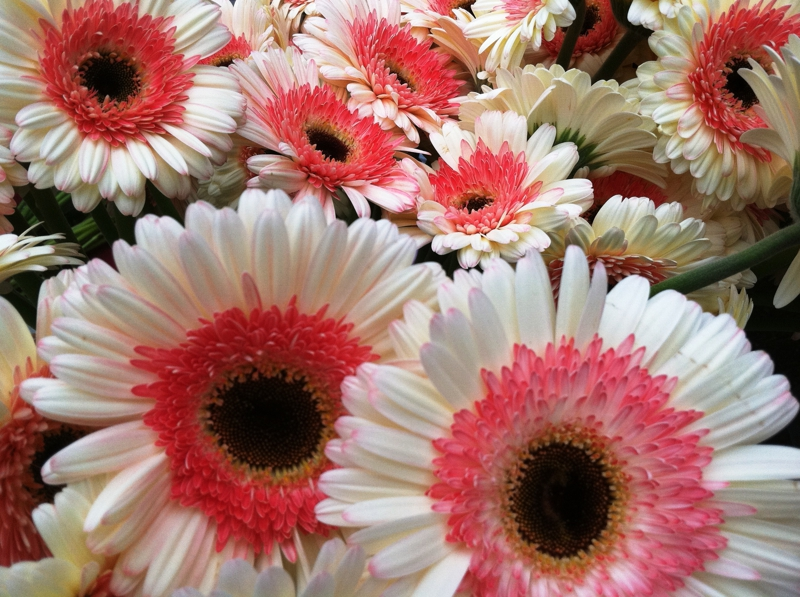gerberas, luxury real estate marketing