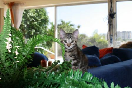 cats Treasure island