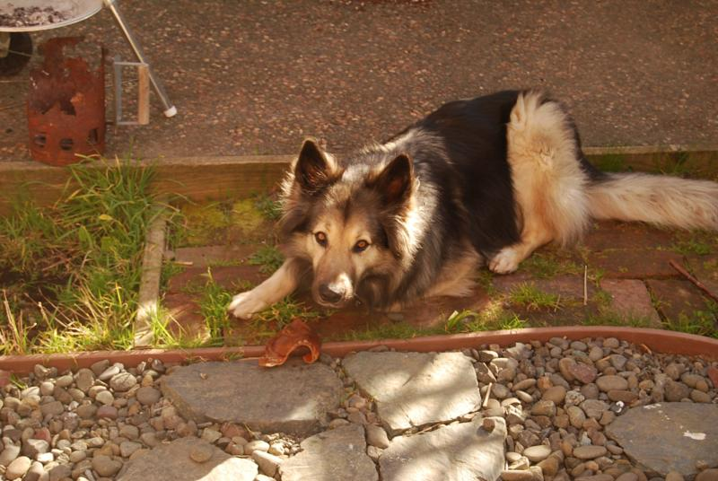 Bon How To Keep My Dog Out Of Garden Designs