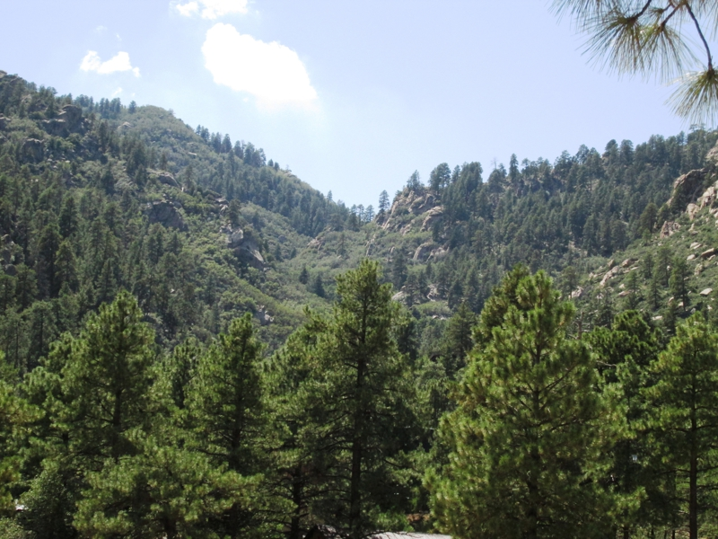 Pine Lake View of Ponderosa Pines