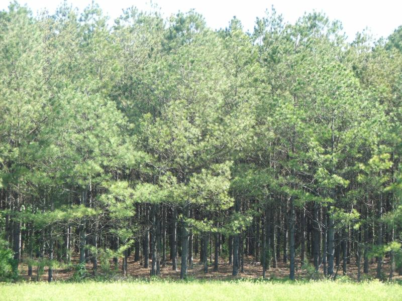 Quality Timberland Investments and Hunting Land for Sale in Alabama