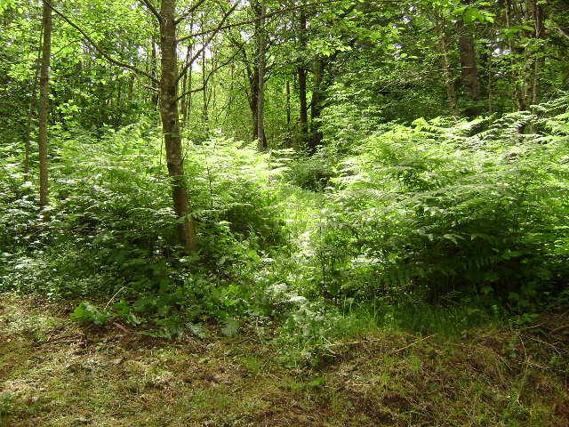 5 acres with apprx 1000 ft of washougal riverfront common for Washougal river fishing