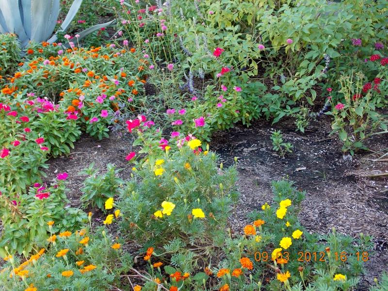 Flower Garden Katy Texas