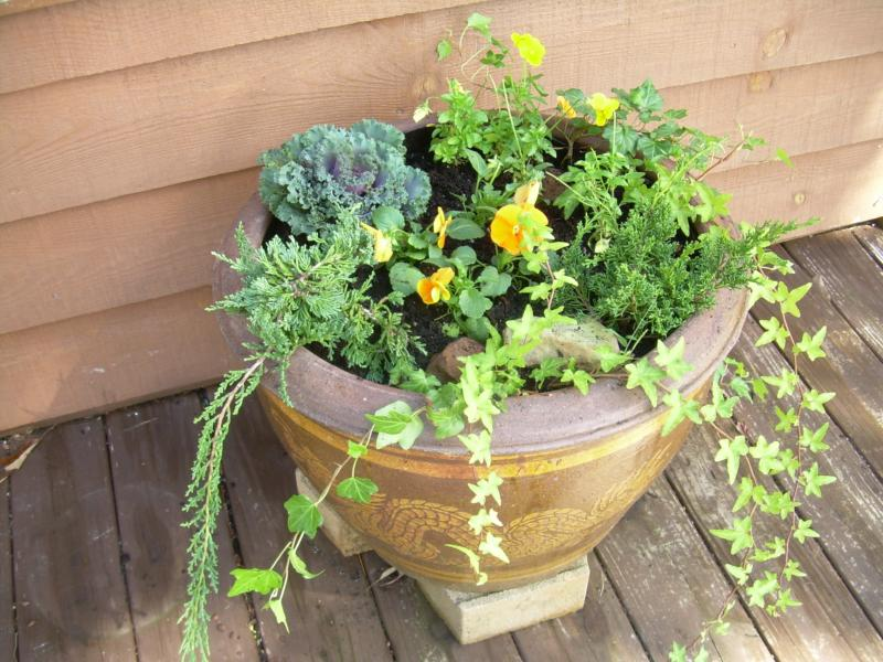 Planting A Fall Container Garden In The Mountains - Murphy North Carolina