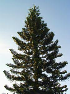 Recycle Your Christmas Tree In Kitsap County