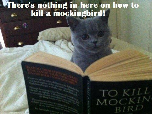 To kill a mockingbird and cat