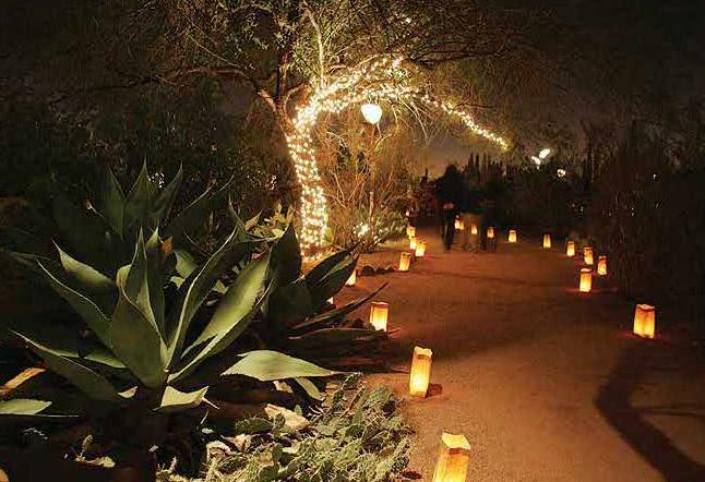 Enjoy The Holidays In Phoenix The Desert Botanical Gard